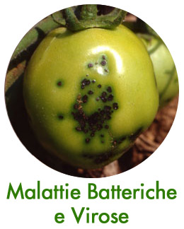 Malattie Batteriche